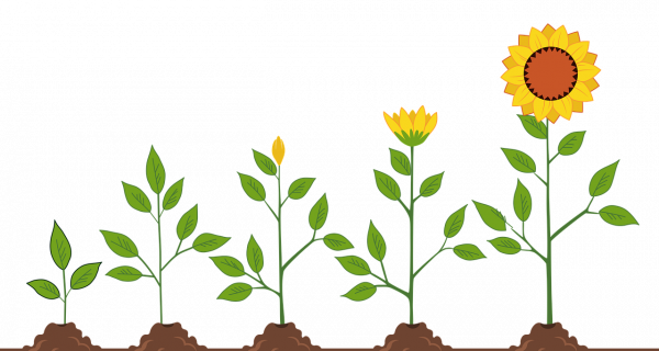 Fifth Wall Knight Frank investiert in European PropTech Fund (c) Pixabay sunflowers-5665223_1280